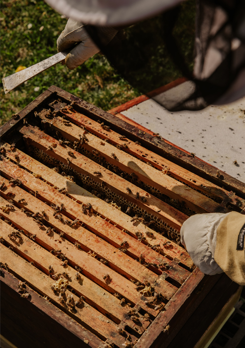 TheBeeBoss Bee Removal Services