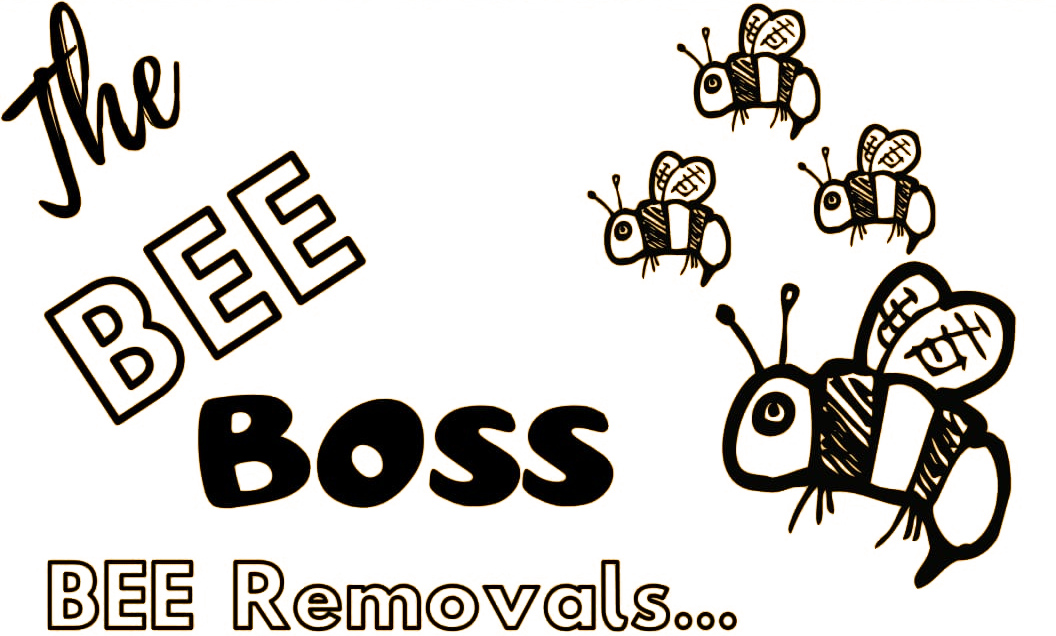 the bee boss bee removal